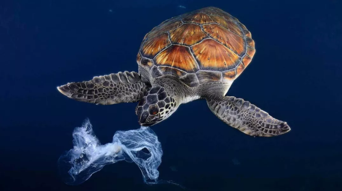 """What Do You Want to do in order for the Turtles to no Longer Eat the """"fake jellyfish""""?"""